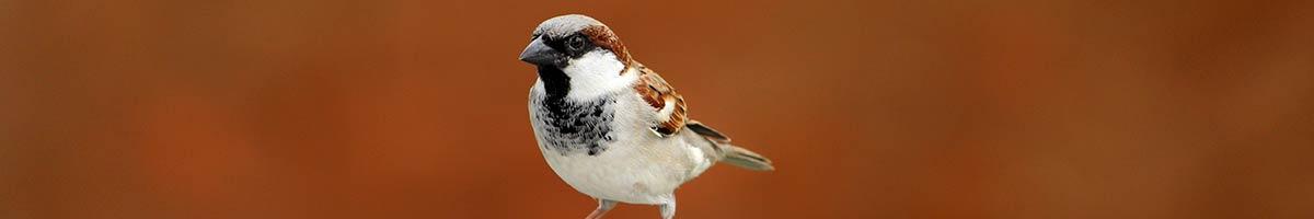 header_bird_01