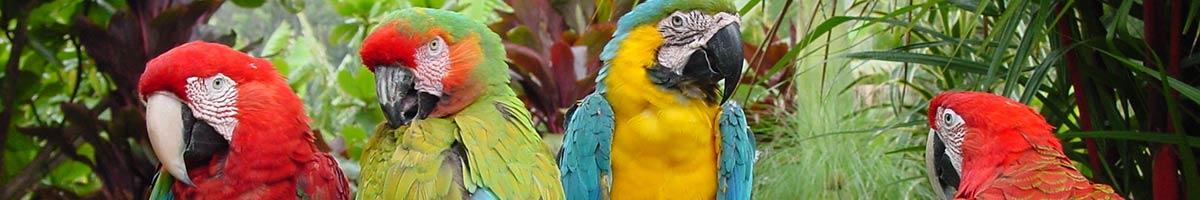 header_bird_02