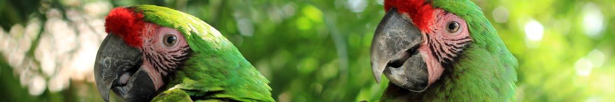 header_bird_04