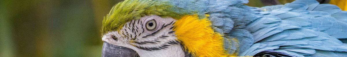 header_bird_07