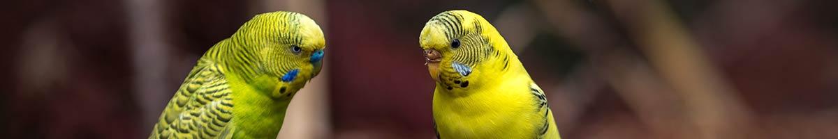 header_bird_09