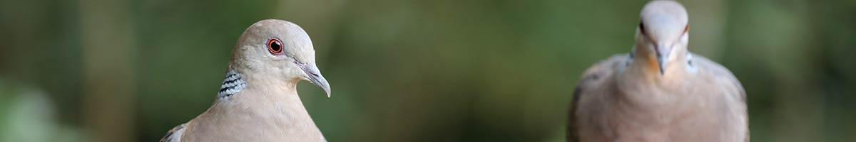 header_bird_10