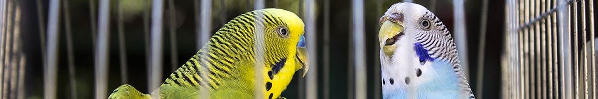 header_bird_11