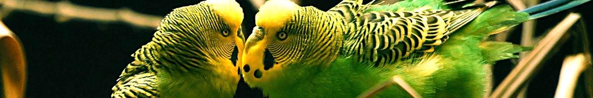 header_bird_12