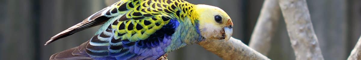 header_bird_13