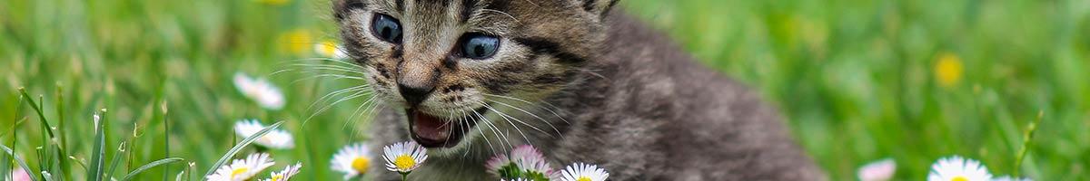 header_cat_01