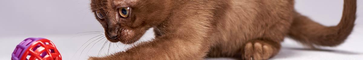 header_cat_02