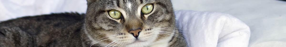 header_cat_03