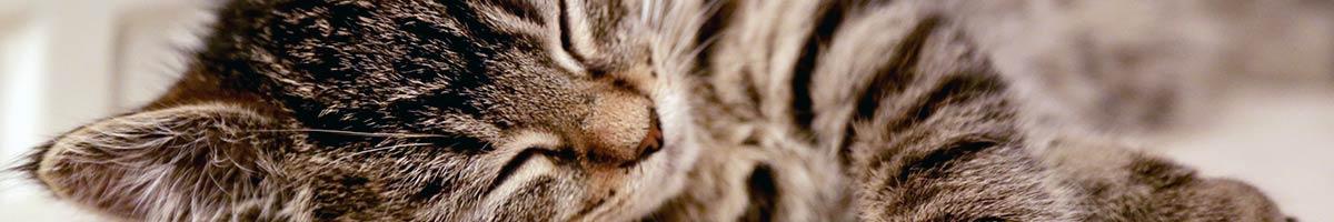 header_cat_04