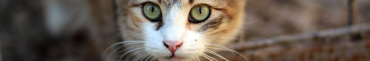 header_cat_05