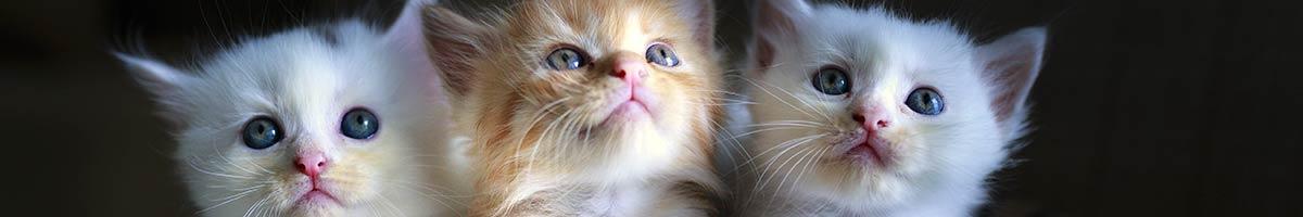 header_cat_06