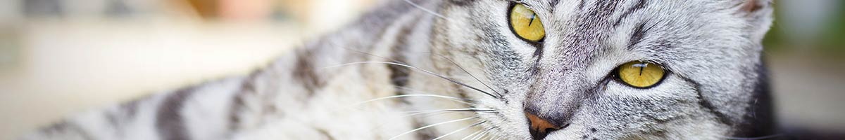 header_cat_07