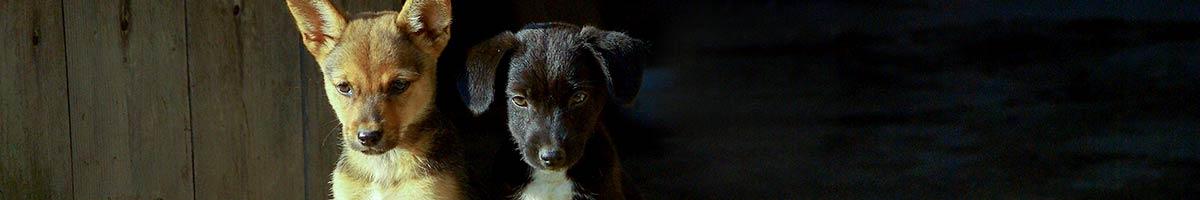 header_dog_10