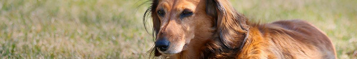 header_dog_11