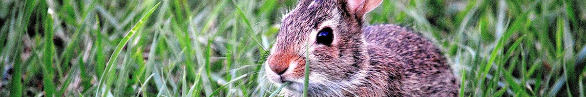 header_rabbit_04